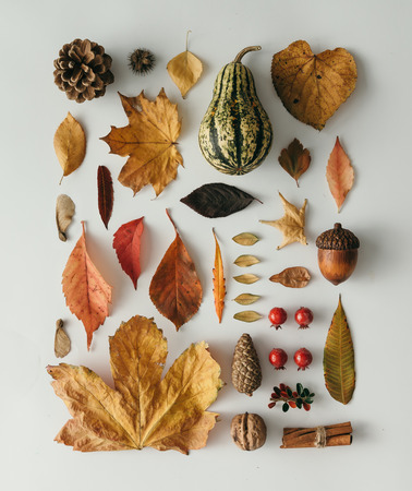 Creative natural layout made of autumn flora. Neatly organised. Flat lay.
