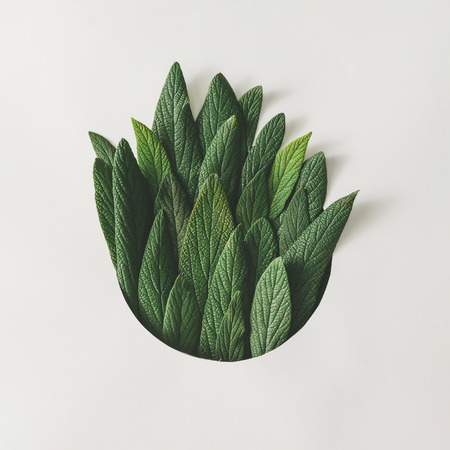Photo for Creative minimal arrangement of green leaves. Nature concept. Flat lay. - Royalty Free Image