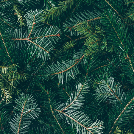 Creative layout made of Christmas tree branches. Flat lay. Nature New Year concept.