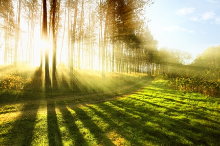 Photo for Sunny forest early in the morning - Royalty Free Image