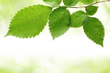 Foto de Green leaves border - Imagen libre de derechos