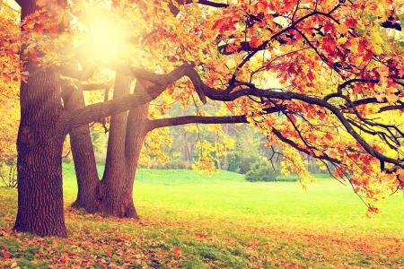 Foto de Autumn landscape - Imagen libre de derechos