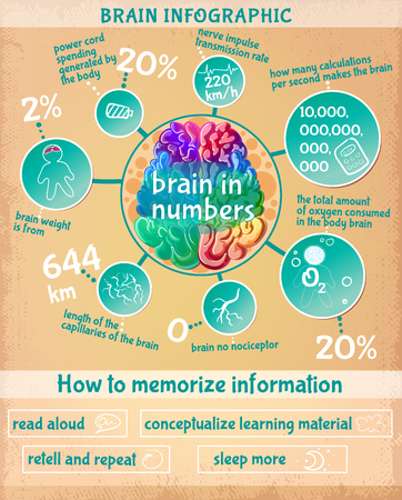 Cartoon Human Brain Infographic Concept