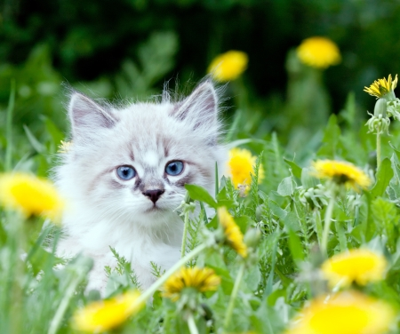 Photo for small kitten sitting in flowers - Royalty Free Image