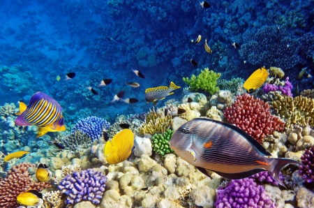 Coral and fish in the Red Sea Egypt