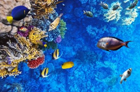 Coral Life Mural Wallpaper