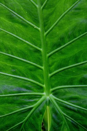 Large green leafy plant