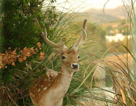 Foto per Deer surprised eating - Immagine Royalty Free