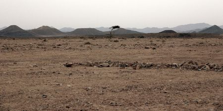 A lone tree in the Egyptian desert
