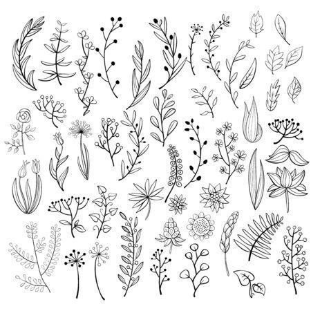 Illustration for Set of  doodle floral elements. - Royalty Free Image