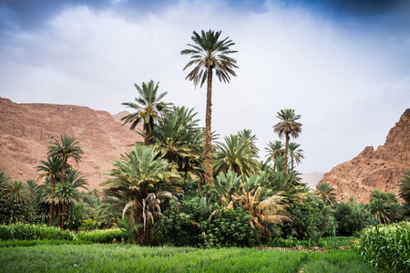 View of the Dades Valley with palm oasis, Morocco, Africa