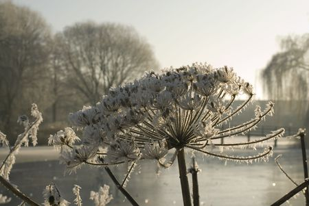 frozen wild flowers