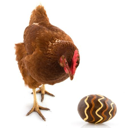 Big brown chicken with easter egg