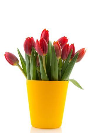 bouquet tulips in modern yellow flower pot