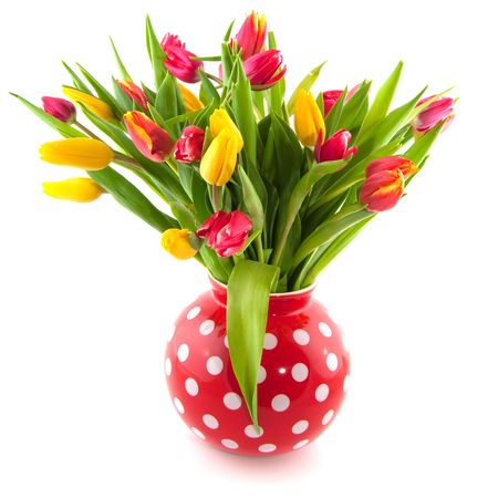 colorful tulips in red speckles vase isolated over white