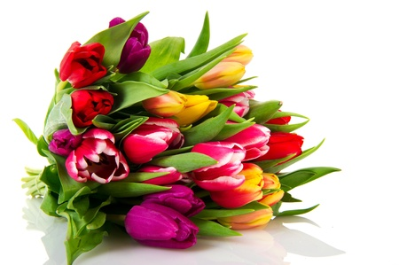 Various colored Dutch tulips isolated on white background