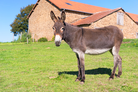 Foto de Donkey in meadows in front of the farm - Imagen libre de derechos