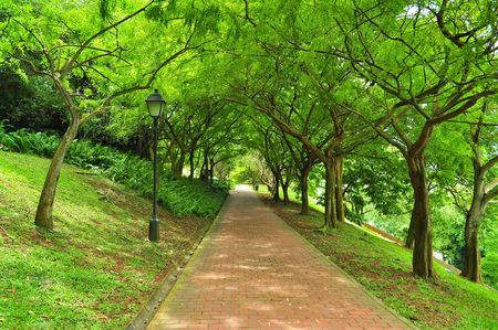 A pathway surrounded by lush greenery at Fort Canning Park, Singapore
