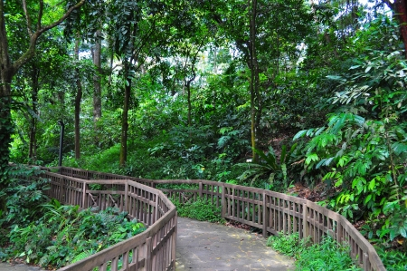 A serene and peaceful forested trail in Bukit Timah nature reserve (Singapore)
