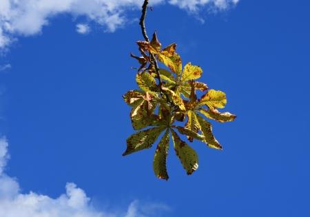 Herbstfarben Kastanie
