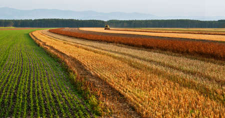 The agricultural machinery reaps an autumn crop. Austria