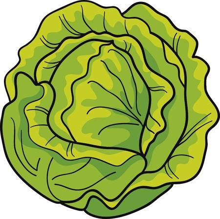 cartoon Illustration of green cabbage