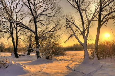 Photo for Beautiful winter sunset with trees in the snow - Royalty Free Image