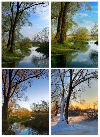A tree by the river at four different seasons - spring summer autumn and winter