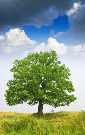 Summer landscape with oak  tree under cloudy sky