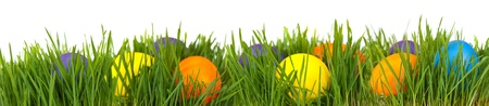 Easter border. Easter eggs in green grass over white background