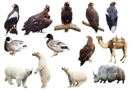 Set of  animals. Isolated over white background
