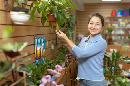 Female florist with Nepenthes plant at flower store