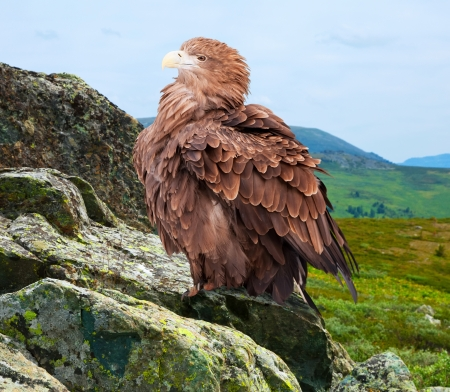 eagle on rock against wildness background