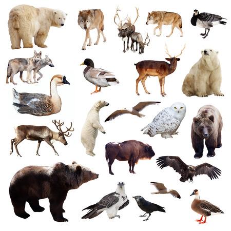 Photo pour Set of european animals. Isolated over white background  - image libre de droit