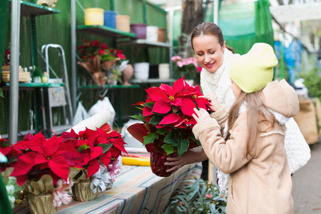 Smiling mom with excited child buying Christmas star flower in market. Focus on woman