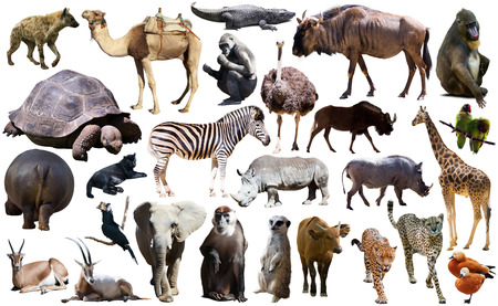 Photo pour Set of different African animals isolated over white - image libre de droit