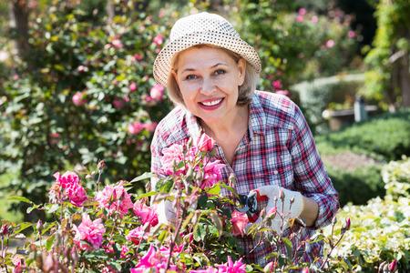 Friendly positive senior woman trimming a rose-bush in the garden