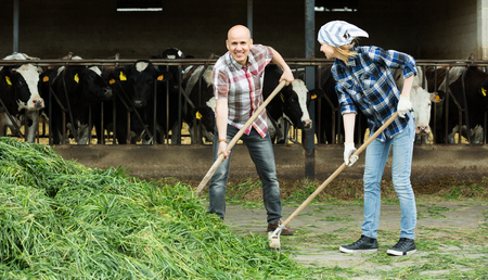Young and mature caucasian fermers preparing grass for feeding cows