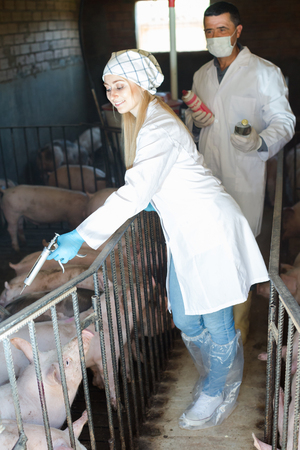 Smiling male farmer and female veterinarian are going to make injection to pigs on farm