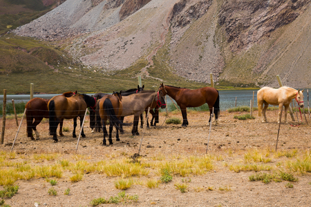 Lake Valle Hermoso Laguna and horses near Andes mountains, Valle Hermoso, Andes, Argentina