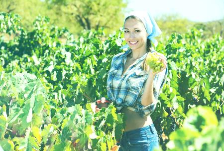 Photo pour Smiling young female worker picking ripe grapes in vine garden - image libre de droit