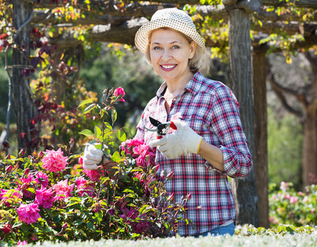 Smiling positive senior woman trimming a rose-bush in the garden