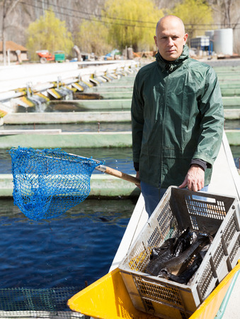 Portrait of man fish farm worker catching sturgeon at pool