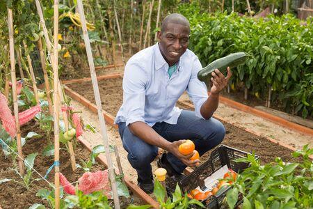 Foto für Young man gardener holding  harvest of fresh vegetables in  garden - Lizenzfreies Bild