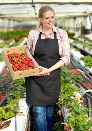 Foto für Portrait of female farmer with organic strawberry crop standing in hothouse - Lizenzfreies Bild