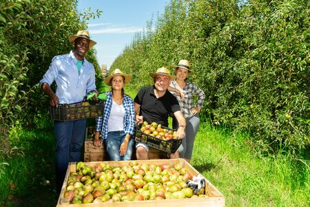 Foto für Portrait of happy international team of farmers near boxes with harvested ripe pears in fruit garden on sunny day - Lizenzfreies Bild