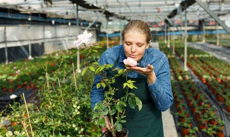 Photo pour Young woman gardener holding pot with rose and standing near seedlings in  greenhouse - image libre de droit