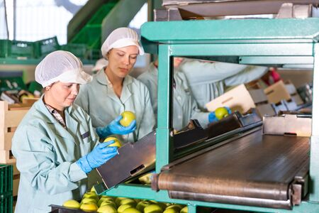 Photo pour Women working on a producing sorting line at fruit warehouse, preparing an apples for packaging - image libre de droit
