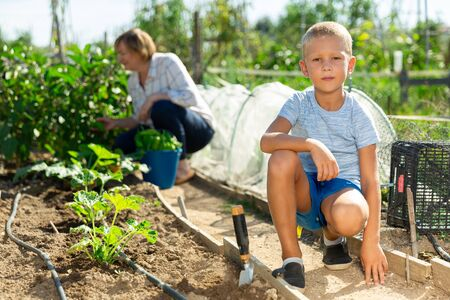 Photo for Portrait of preschool boy working in vegetable garden in summer, woman on background - Royalty Free Image