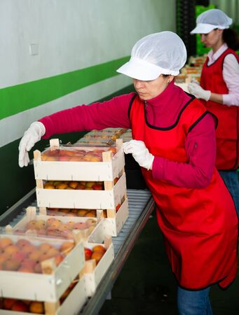 Photo pour Two female fruit warehouse workers in process of packaging fresh apricots in boxes - image libre de droit